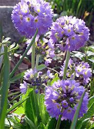 10 great plants for shade gardening gardeners com