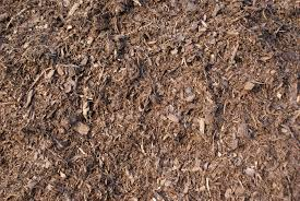ground bark texture 1 by tailcat on deviantart
