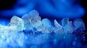 blue drops wallpapers flowers macro water blue drops surface flowers flower wallpaper