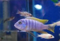 management of aquarium ornamental fish