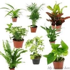 plante d駱olluante chambre plantes depolluantes