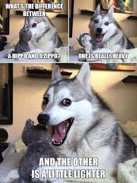 Pun Dog Meme - image result for dog puns dogs pinterest