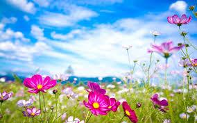 Flower Pictures Summer Sunshine Wallpaper 7467 1920 X 1200 Wallpaperlayer Com