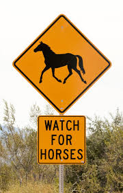 watch for horses at salt river arizona outdoor families magazine