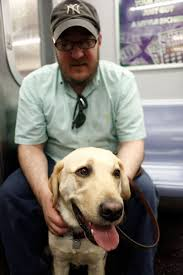 Dogs Helping Blind People The 10 Biggest Misconceptions About Guide Dogs For The Blind