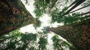 suzanne simard how trees talk to each other ted talk