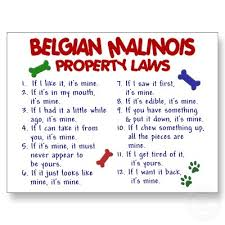 belgian malinois quotes 17 best add in the belgian malinois mix images on pinterest
