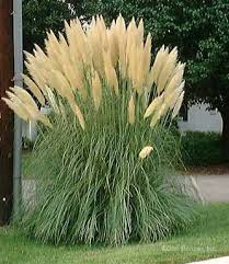 8 uses for ornamental grasses and wheat in your landscaping