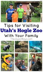 Zoo Lights Utah Hogle Zoo by Tips For Visiting Utah U0027s Hogle Zoo With Your Family