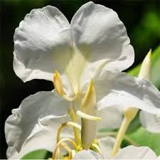 The Most Fragrant Plants - 31 best plants images on pinterest flowers flower gardening and