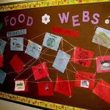 39 best 3rd grade food chain images on pinterest teaching