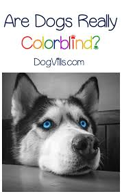 Are Dogs And Cats Color Blind Index Of Wp Content Uploads 2016 12