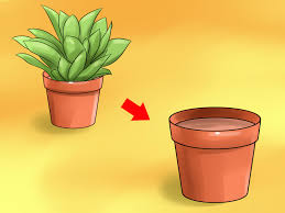 how to care for a croton plant wikihow