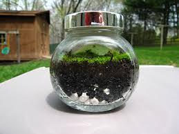 moss terrarium nuttin u0027 but preschool
