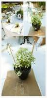 Potted Plants Wedding Centerpieces by Spring U0027s Budding Floral Trends Wedding Centerpieces
