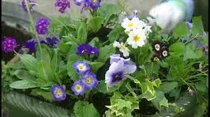 image of spring flowers video planting spring flowers in outdoor pots martha stewart