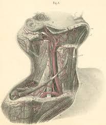 Right Side Human Anatomy Anatomy Atlases Atlas Of Human Anatomy Plate 17 Figure 3