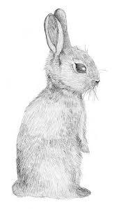 best 25 rabbit drawing ideas on pinterest rabbit illustration