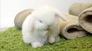 chambre gar輟ns songs in baby bunny grooming so n0b5ot69fpu mooma sh