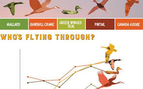 dnr touts u0027migration meter u0027 bird migration nears peak