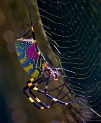 Cute Spiders Phil Ebersole S - 93 best spiders images on pinterest butterflies spiders and a