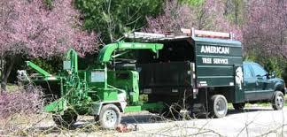 baltimore s best tree care company american tree service