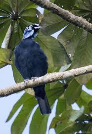 1340 best birds images on pinterest colorful birds beautiful