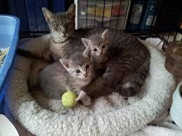 Blind Cat Sanctuary Tlc Cat Sanctuary