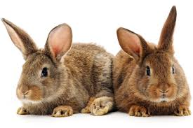 why banning pet store sales of rabbits is a great idea new york post