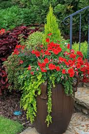 hanging basket plants for sun the graceful gardener the graceful gardener u0027s containers