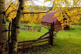 widescreen trees fall autumn nature colorful splendor