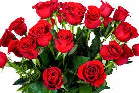 2 dozen roses flwerz 2 dozen roses stem fresh cut luxury bouquet
