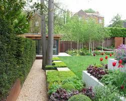 silver birch trees for small garden google search garden ideas