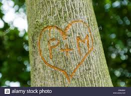 initials carved in tree carved initials letter of on the tree stock photo royalty