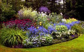 immagini di giardini fioriti fiori e piante da giardino consigli paratici arredareilgiardino it
