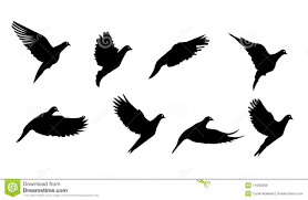 bird wing cutout royalty free stock images image 16334489