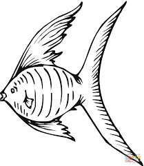 queen angelfish coloring page free printable coloring pages