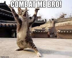 Come At Me Meme - come at me bro imgflip