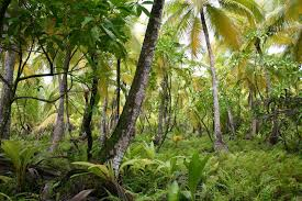 Tropical Plant Biology - plant ecology wikipedia