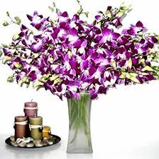 purple orchid flower fresh flowers 20 premium purple dendrobium orchids