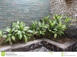 Plants For The Bedroom by Bathroom Bathroom Plants Plants For The Bedroom 2017 9 Plants