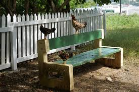 free images wood road bench backyard furniture chicken