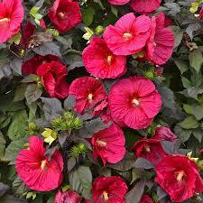 high heat plants heat tolerent plants weather plants
