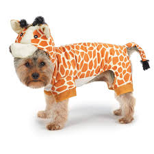 Halloween Costumes Dogs 20 Cute Dog Costumes Halloween Brosive