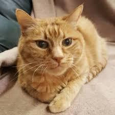 Blind Cat Sanctuary Second Chance Sheridan Cat Rescue