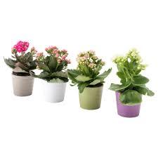 plantes pour bureau plante pour bureau charmant plantes pots et plantes extérieur ikea