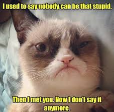 Mean Cat Memes - grumpy cat mean memes cataholics pinterest grumpy cat