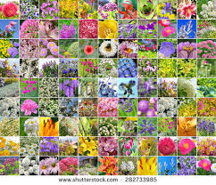 collage pictures flowers decorative garden flowers stock photo