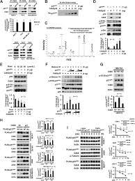 cdk5 directly targets nuclear p21cip1 and promotes cancer cell