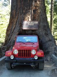 Chandelier Drive Through Tree 26 Best Mendocino County Redwoods Images On Pinterest Northern